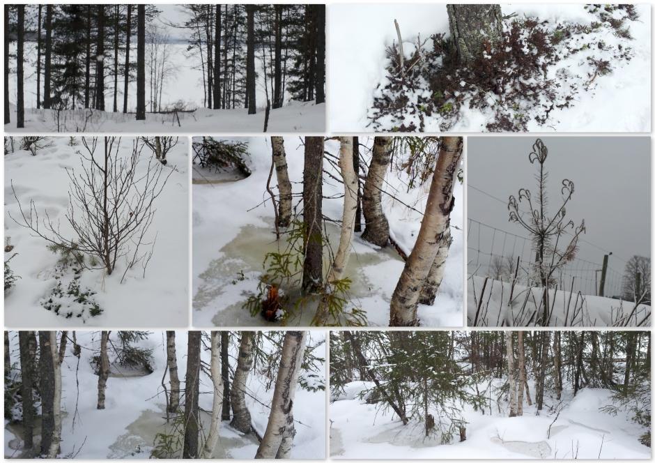 1nog winter