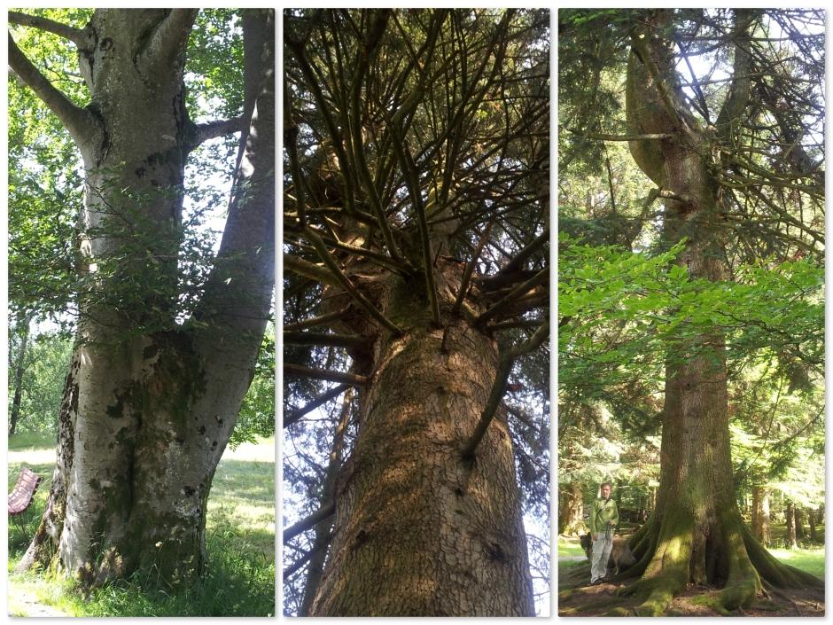 Baroniet bomen