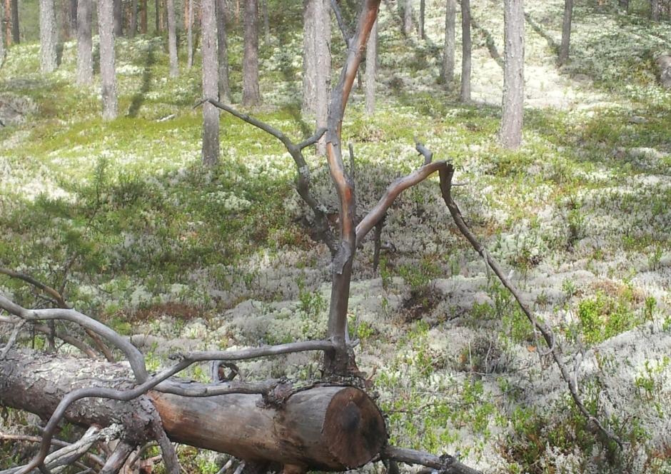 bos met boom