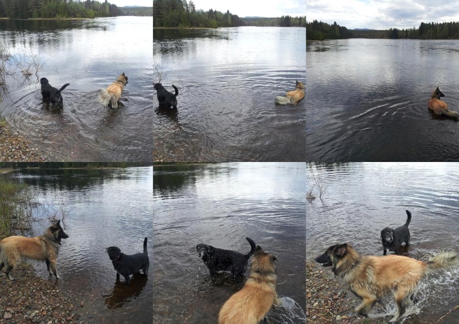 honden genieten van het water