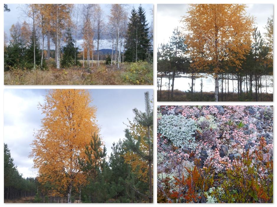 herfstkleuren3