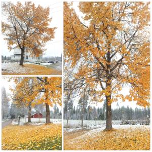 1sneeuw:herfst