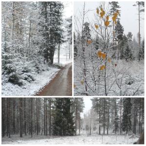 2sneeuw:herfst