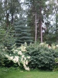 DSC02468